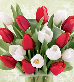 West hollywood florist 15 stem red white tulips west hollywood ca 15 stem red white tulips mightylinksfo